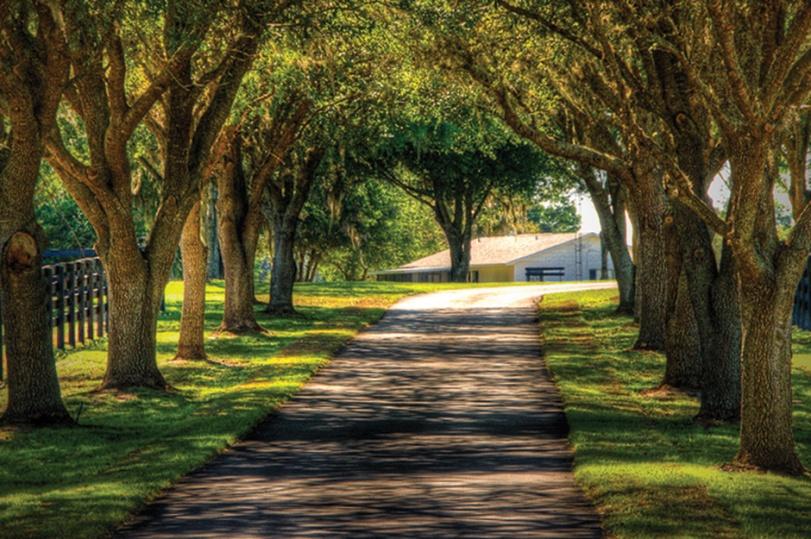 Horse Farm Driveway