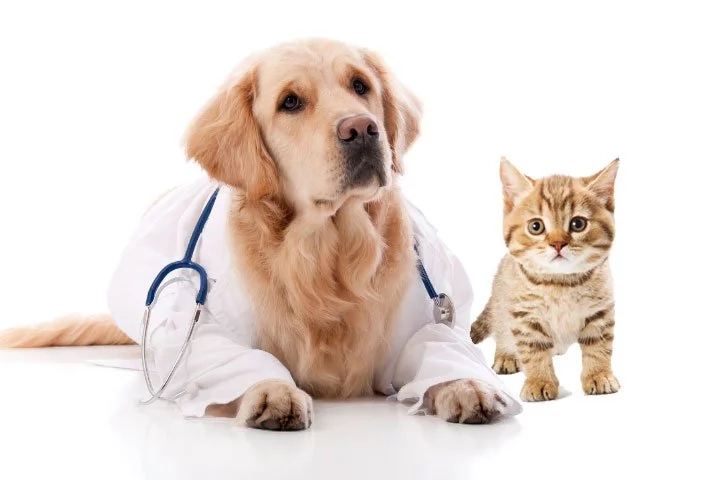 pets-good-for-your-health