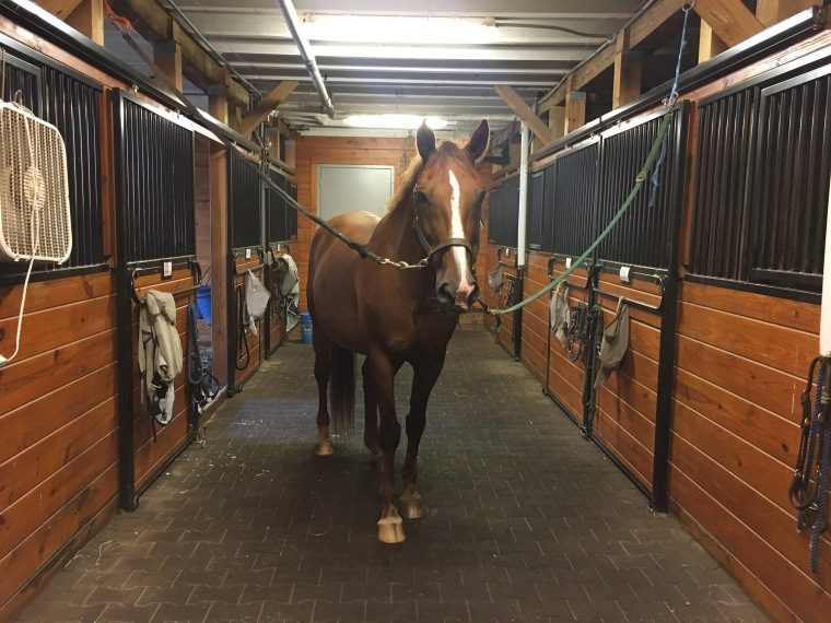 Honey seems to like her new stall at The Ethel Walker School Equestrian Center